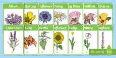 Flower Identification Display Posters
