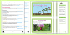 EYFS Life Cycle of a Bean Discovery Sack Plan and Resource Pack