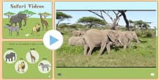 Safari Video PowerPoint