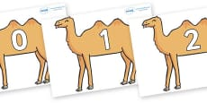 Numbers 0-31 on Camels