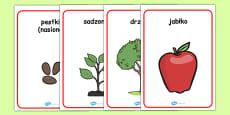 Apple Tree Life Cycle Growth Posters Polish
