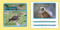 UK Birds of Prey Display Photos