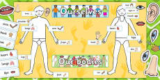 Ourselves Human Body Display Pack