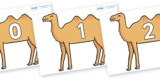 Numbers 0-50 on Camels