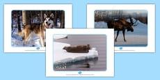 Arctic Animal Display Photos Arabic
