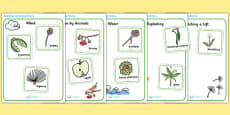 Seed Dispersal Sorting Activity