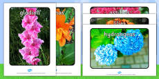 Summer Blooming Flowers Display Photos