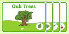 Editable Class Group Signs (Trees)
