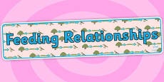 Feeding Relationships Display Banner
