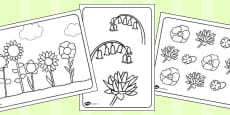 Flowers Colouring Sheets