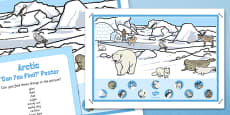 Arctic Can You Find Poster And Prompt Card Pack