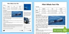 * NEW * Pilot Whale Fact File