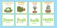 Fruit and Vegetable Plant Matching Cards Romanian Translation