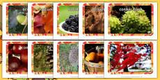 Autumn Display Photos