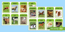 Mothers and their Young Farm Animals Photo Flash Cards Welsh