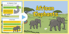 Safari African Elephant Information PowerPoint