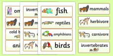 Animal Classes Word Cards