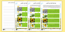 Sunflower Plant Life Cycle Differentiated Reading Comprehension Activity Arabic
