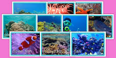 Coral Reef Display Photos
