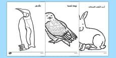 Arctic Animals Colouring Images Arabic