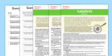Ladybird Differentiated Reading Comprehension Activity Polish Translation