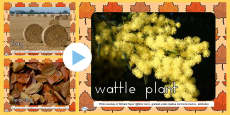 Australia - Autumn Photo PowerPoint