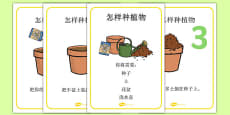 How to Grow a Plant Display Posters Chinese Mandarin