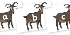Phase 2 Phonemes on Big Billy Goats