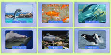 Irish Fish and Sea Creatures Display Photos Gaeilge