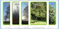 Trees Display Photos