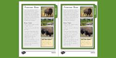 USA Bison Fact Sheet