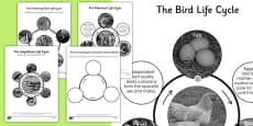 Year 5 Differentiated Life Cycles Sheets