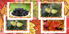 Autumn Display Photos Polish Translation