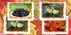 Autumn Display Photos Polish Translation