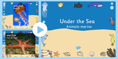 Under The Sea Photo PowerPoint Romanian Translation