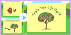 Apple Tree Life Cycle PowerPoint