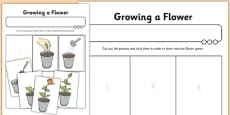 Activity Sheet Growing a Flower