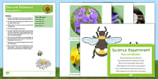 EYFS Bee and Pollination Science Experiment