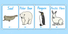 Polar Regions Animals Display Posters