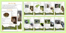 New Zealand Native Birds Fact File