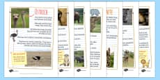 Safari Animal Fact File Display Posters