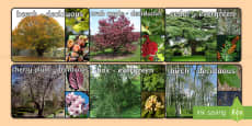 Deciduous and Evergreen Trees Display Photos