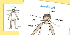 Parts of the Body A4 Head and Shoulders Arabic Translation
