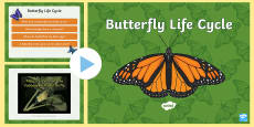 Butterfly Life Cycle Video PowerPoint (Minibeasts)