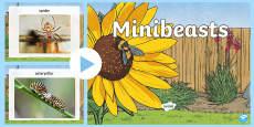 Minibeasts Photo  PowerPoint