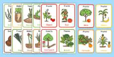 Partea comestibilă a plantelor - Cartonașe