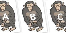 A-Z Alphabet on Chimps