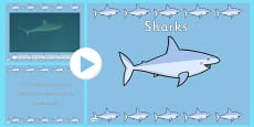 Under the Sea Shark Video PowerPoint