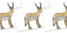 KS1 Keywords on Antelopes
