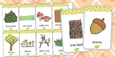 Woodland Animals Habitat Flash Cards